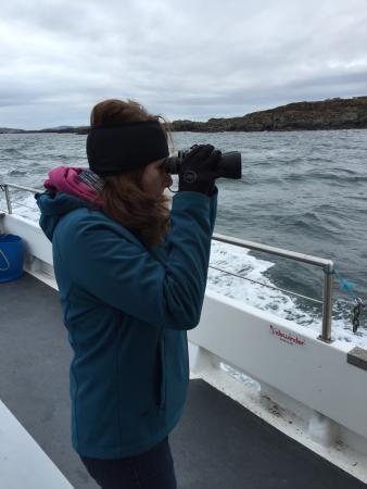 Port Ellen, UK: Checking out seals on the shoreline