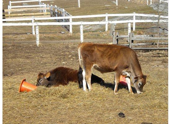 Muscoot Farm Photo