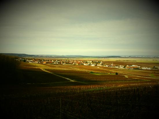 Mailly-Champagne, Francia: View over Mailly Champagne vine yards