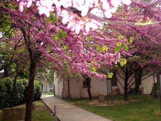 Giardino con alberi fioriti foto di anfiteatro romano for Alberi fioriti da giardino