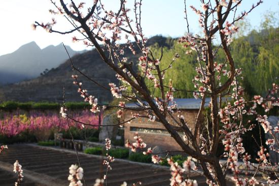 Brickyard Retreat at Mutianyu Great Wall: Spring in Mutianyu