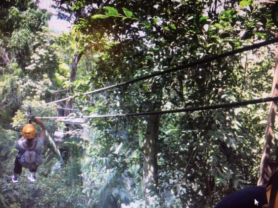 Belize Zip Line Canopy Tours: Away she goes!