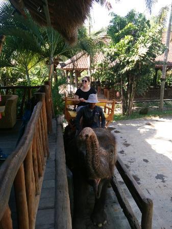 Ketut Bali Driver