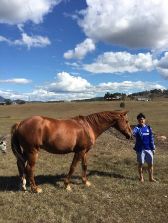 Beaudesert, Australia: Picturesque landscape, Friendly Animals, Wonderful Hosts