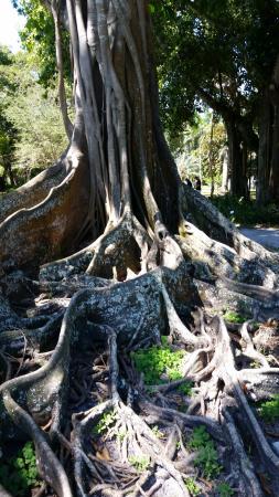 Edison Park: cool tree