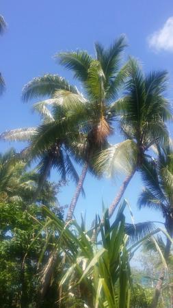 Dravuni Island : 20160304_115854_large.jpg