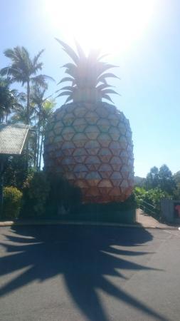 Nambour, Austrália: DSC_1848_large.jpg