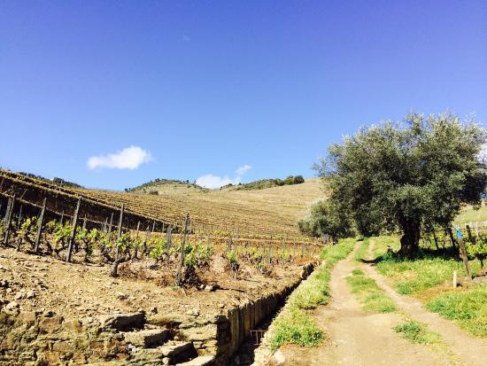 Douro Valley : photo0.jpg