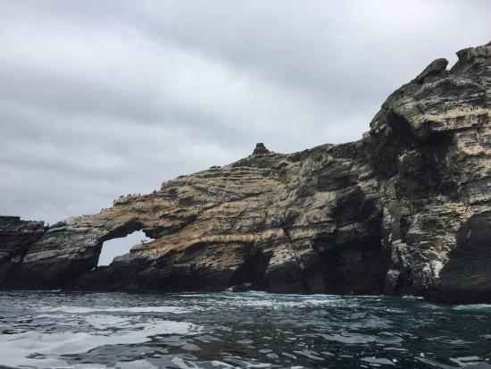Chanaral, Chile: Paseo de avistamiento de ballenas en Chañaral de Aceituno.