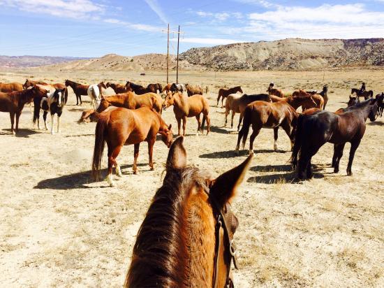 Dryhead Ranch : photo9.jpg