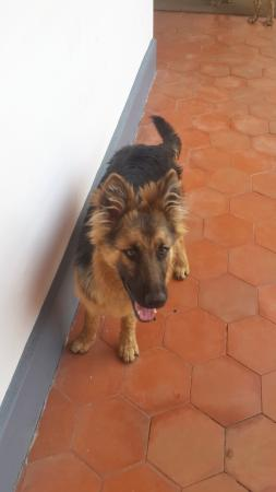 Red Hill Nature Resort: Friendly dog in the resort