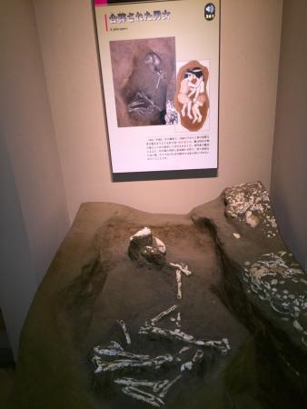 Tobinodai Historic Park Museum: photo4.jpg