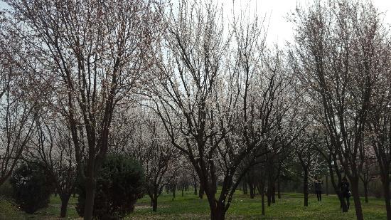 zhangjianjie picture of lead to china hefei tripadvisor rh tripadvisor com