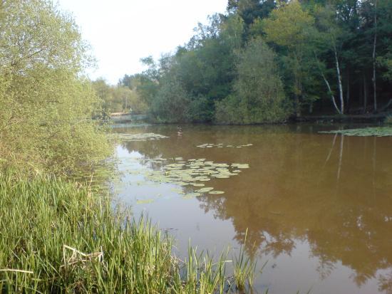 Arlington, UK: Abbots Wood Lake