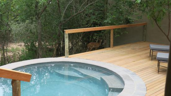 Londolozi Private Game Reserve, Afrika Selatan: Private Plunge Pool open to the Bush