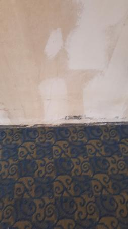Days Inn Charlotte/woodlawn Near Carowinds: Black mold througout
