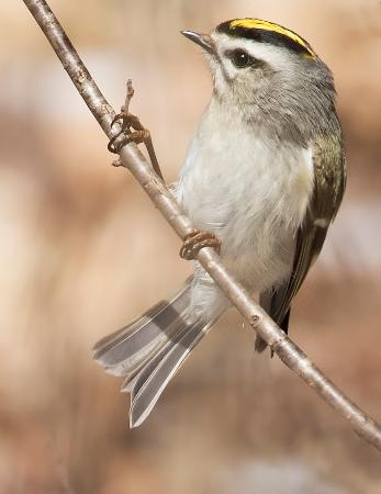 Lindsay, كندا: Birding, a favourite at Gamiing