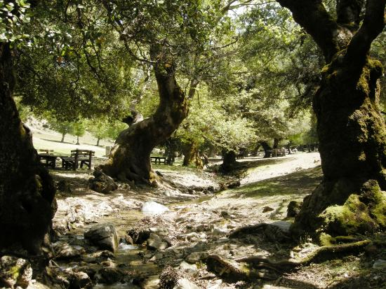 Zaros, Greece: Rouvas Forest (with  oak trees )
