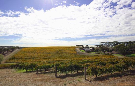McLaren Vale, Australia: View from the carpark