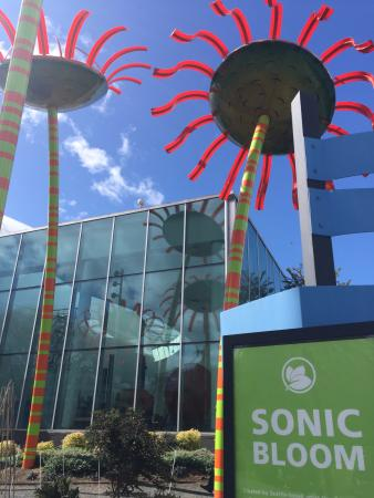 Sonic Bloom By Dan Corson