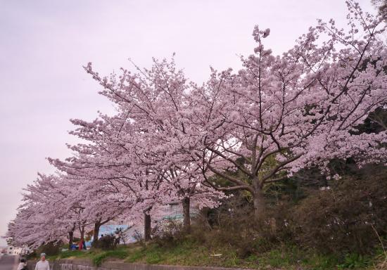 Akutagawa Ryokuchi