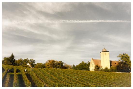 Schloss Hallburg - Lage in den Weinbergen (Oktober 2013)