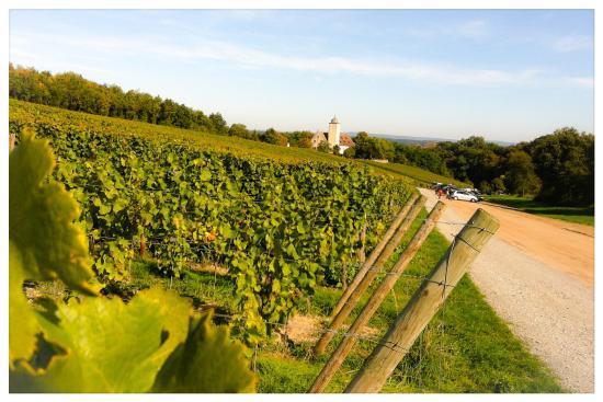 Blick aus den umliegenden Weinbergen auf Schloss Hallburg (Oktober 2013)