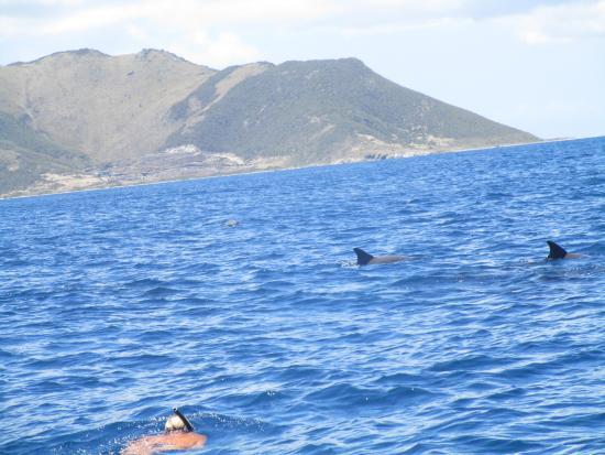 Oyster Pond, St. Martin/St. Maarten: Dolphin's!