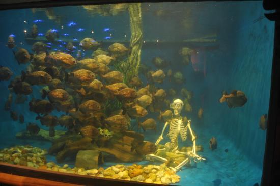 The tank of piranha picture of aquaria klcc kuala for Piranha fish tank