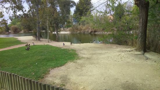 Сан-Мартин-де-ла-Вега, Испания: Patos