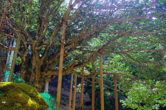 Taki no Sennen Tubaki Park