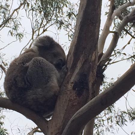 Cowes, أستراليا: photo1.jpg