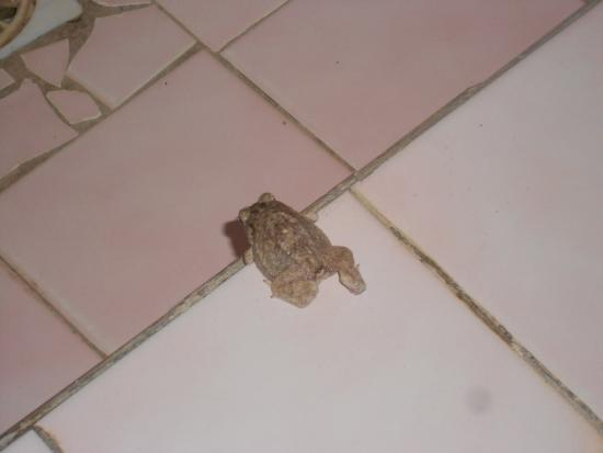 L'ile de Carabane, Senegal: my shower buddy ;-)