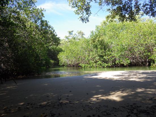 Puerto Villamil, Ecuador: mangrove