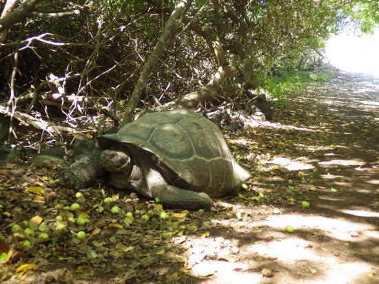 Puerto Villamil, Ecuador: tortue