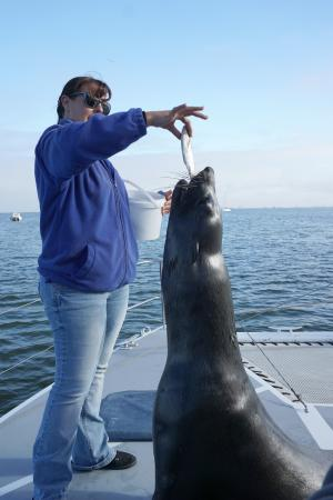Walvis Bay, Namibia: A Cape Fur Seal comes aboard.