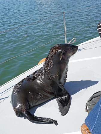 Walvis Bay, Namibia: A baby fur seal came aboard as we neared the jetty on our return.