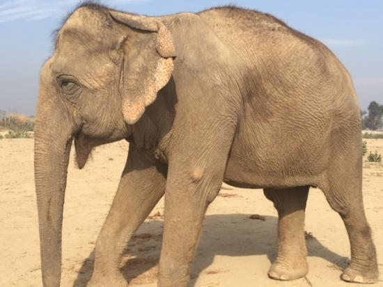 Wildlife SOS: TLC while recuperating: one of the centre's beautiful patients