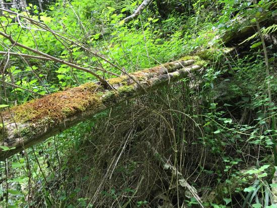 Teniqua Treetops: The river walk