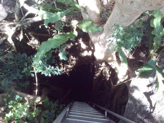 Tecoh, Μεξικό: The entrance to the cenote