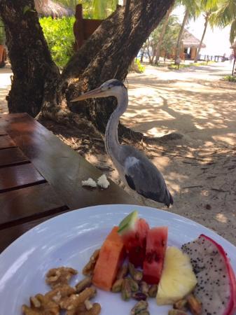 Hembadhu: My breakfast buddy :)