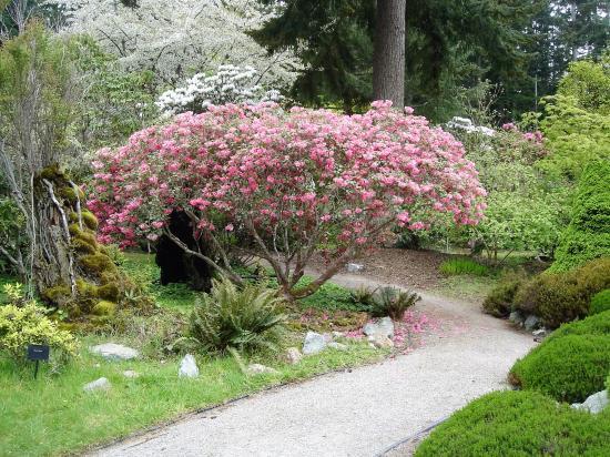 path of pinks at Meerkerk - Picture of Meerkerk Rhododendron Gardens ...
