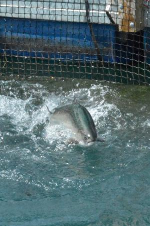 Twizel, Nueva Zelanda: Cheeky Salmon