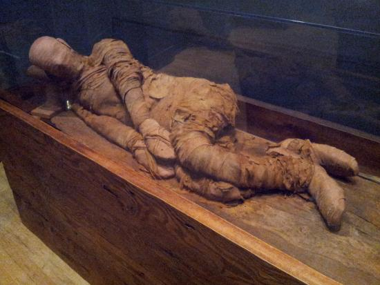 the oldest mummy in the western hemisphere picture of michael c rh tripadvisor ie