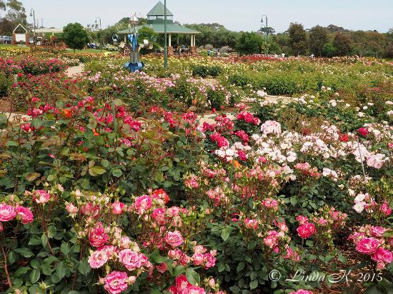 ‪Mornington Botanical Rose Gardens‬