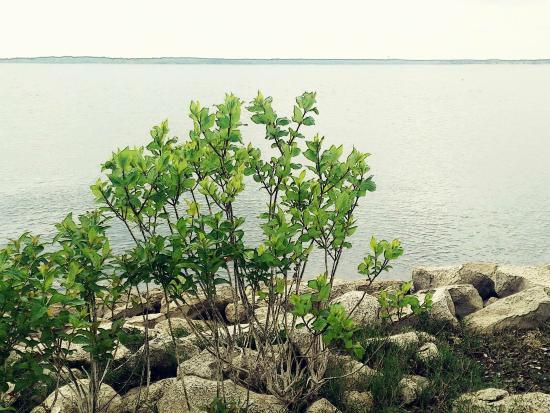 Ray Roberts Lake State Park: photo1.jpg