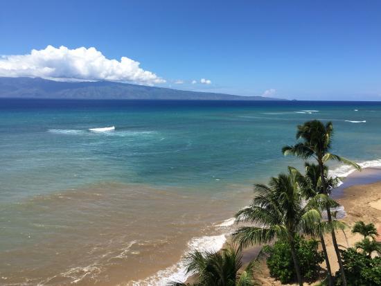 Beach Bums Maui Reviews