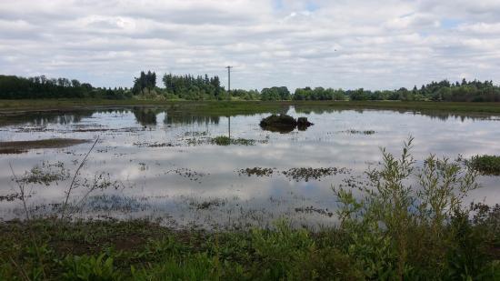 Jackson Bottom Wetlands Preserve: trail going towards little house on the far left side
