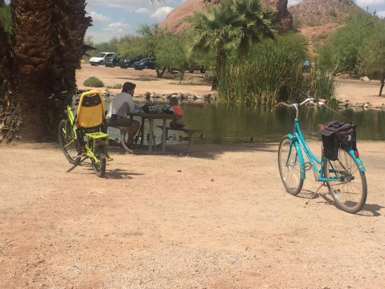 The Bicycle Cellar photo0.jpg & photo0.jpg - Picture of The Bicycle Cellar Tempe - TripAdvisor