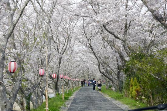 Mori-machi, Japón: 太田川桜堤